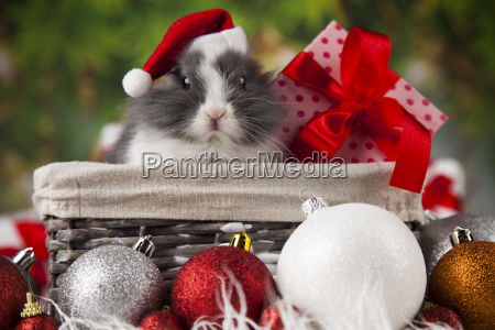 animal, , rabbit, , bunny, on, christmas, background - 25336442