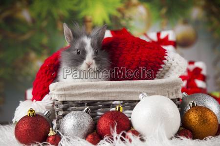animal, , rabbit, , bunny, on, christmas, background - 25336504