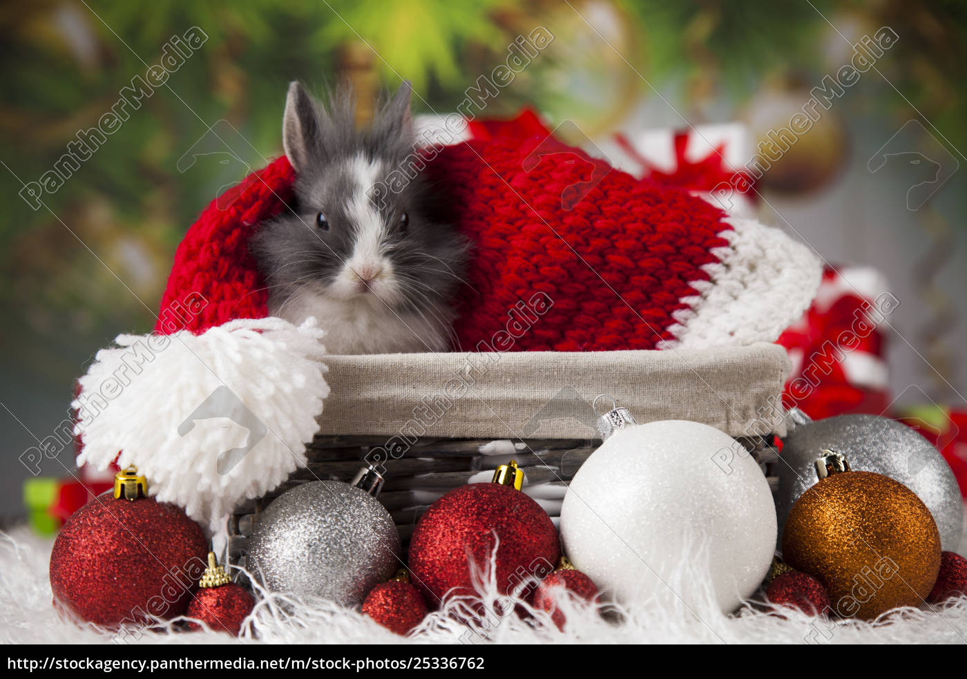 animal, , rabbit, , bunny, on, christmas, background - 25336762