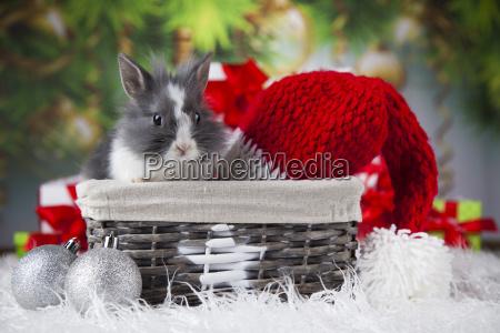 animal, , rabbit, , bunny, on, christmas, background - 25336834