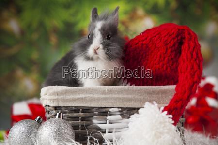 christmas, bunny, , santa, baby, red, hat - 25336826