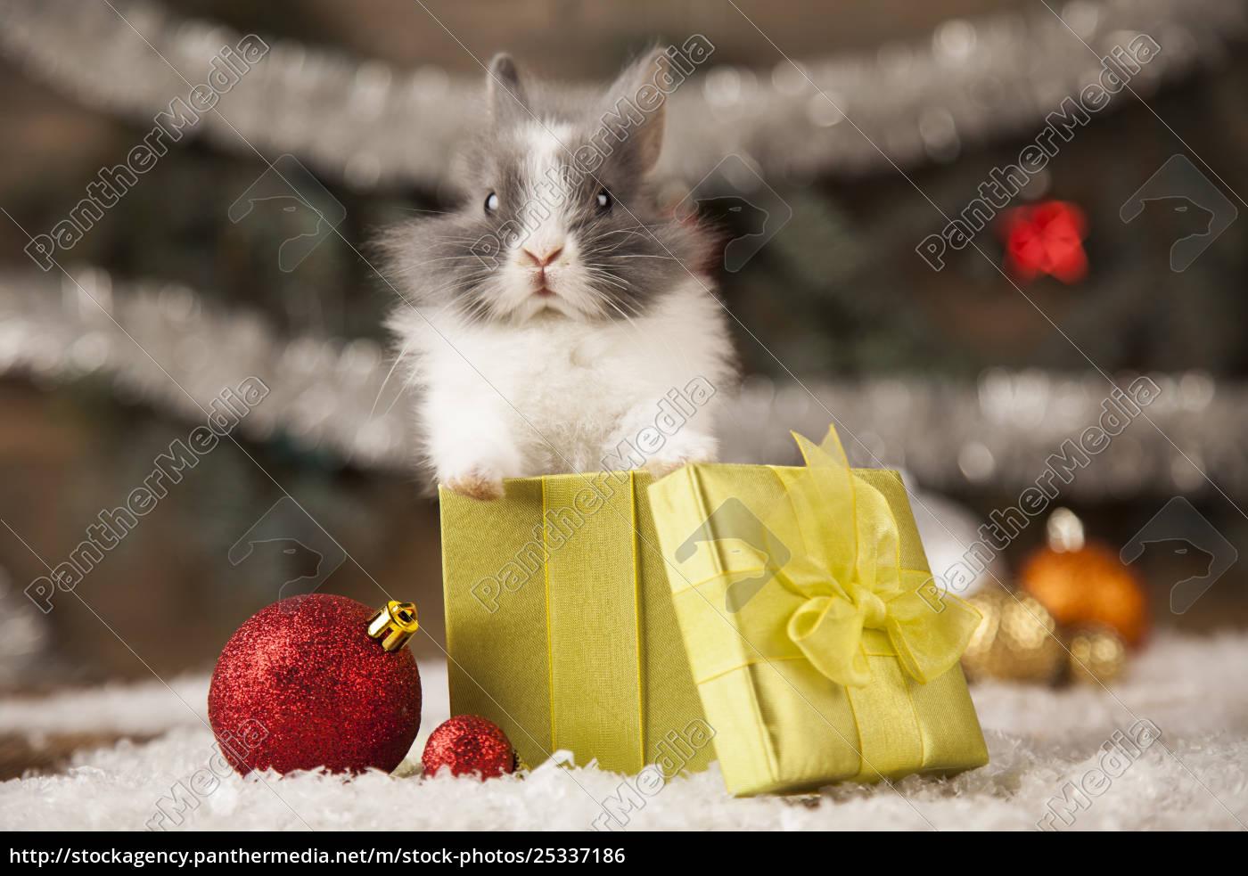 animal, , rabbit, , bunny, on, christmas, background - 25337186
