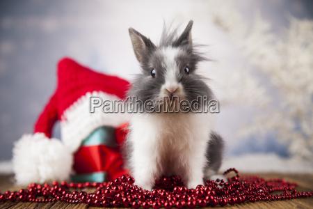 animal, , rabbit, , bunny, on, christmas, background - 25338872