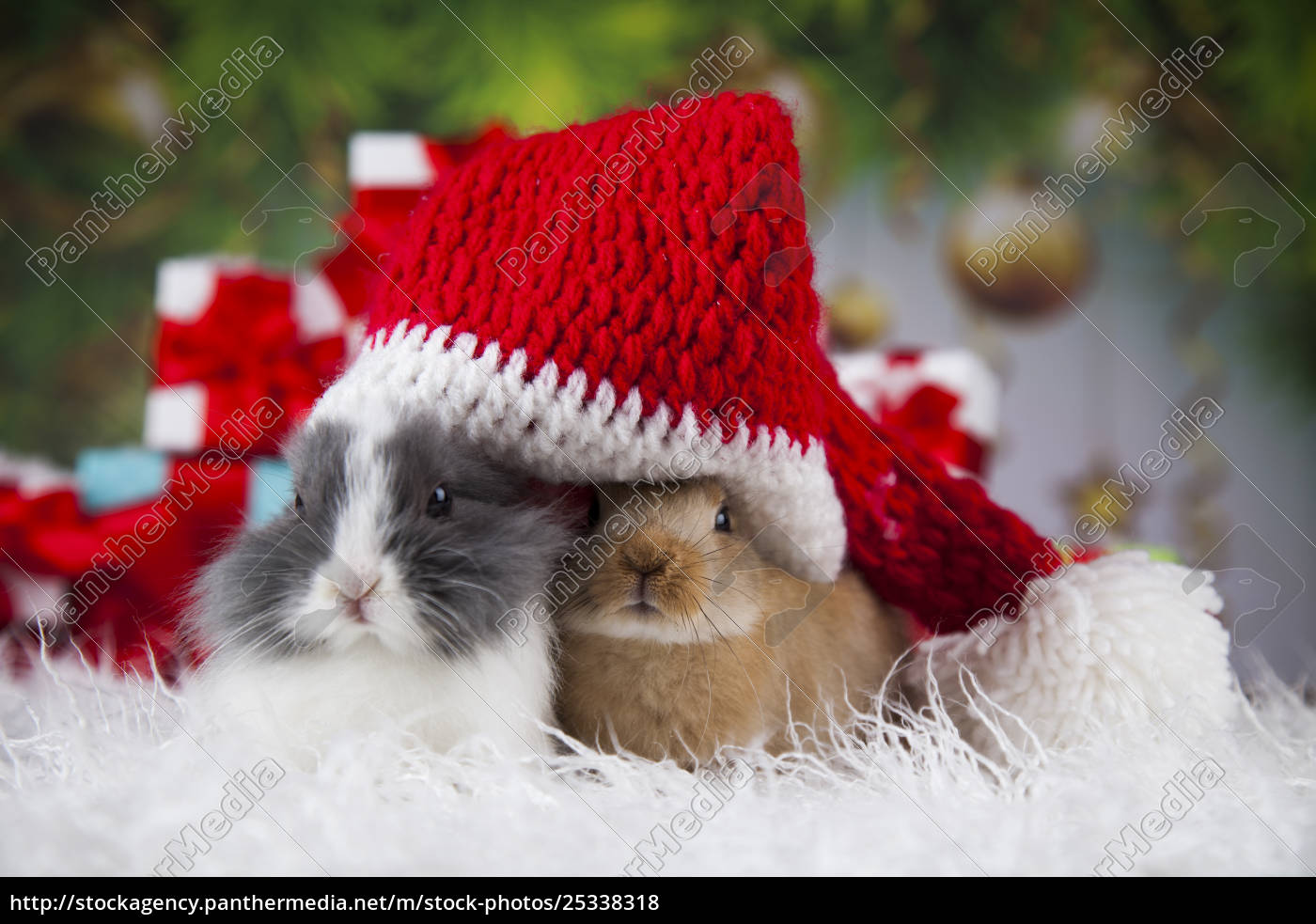 bunny, with, rabbit, , christmas, red, santa - 25338318