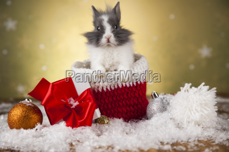 holiday, christmas, bunny, in, santa, hat - 25338472
