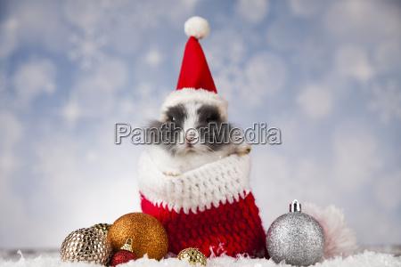 holiday, christmas, bunny, in, santa, hat - 25338748