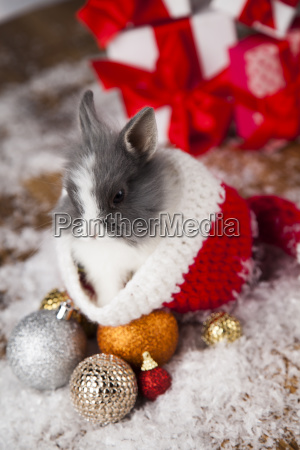 holiday, christmas, bunny, in, santa, hat - 25338754