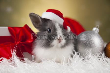 holiday, christmas, bunny, in, santa, hat - 25338868