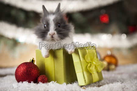 little, bunny, funny, rabbit, on, christmas, background - 25338454
