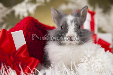 little, santa, bunny, on, christmas, background - 25338800