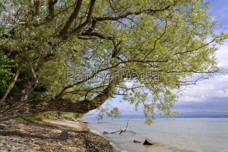 lake constance baden wuerttemberg germany europe