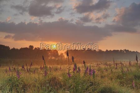 bucolic flower plant fog sights flowers