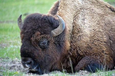 animal mammal fauna national park animals
