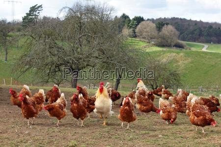 animal bird animals agriculture farming sights