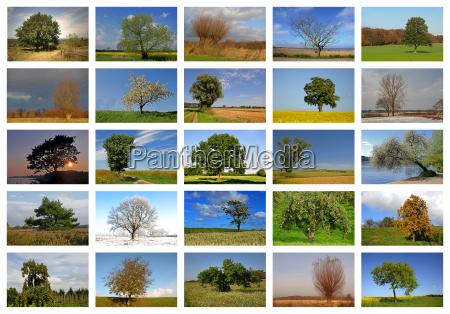 tree trees winter deciduous tree summer