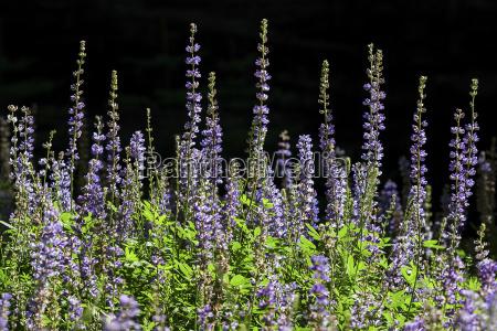 national park bloom blossom flourish flourishing