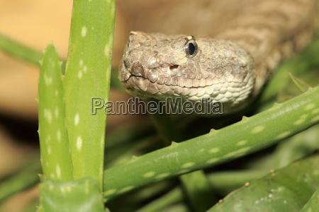 studio photography animal reptile fauna animals