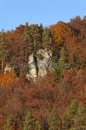 climbing rocks in the autumn beech