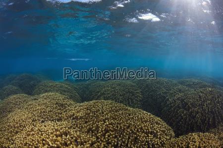 waters sights sunbeams sunlight sightseeing underwater