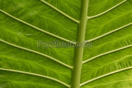 leaf macro close up macro admission
