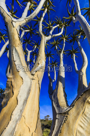 worms eye closeup tree trees national