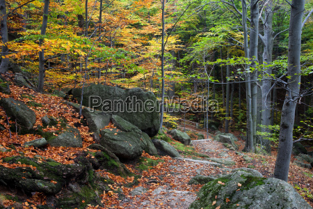 autumn mountain forest with stairs