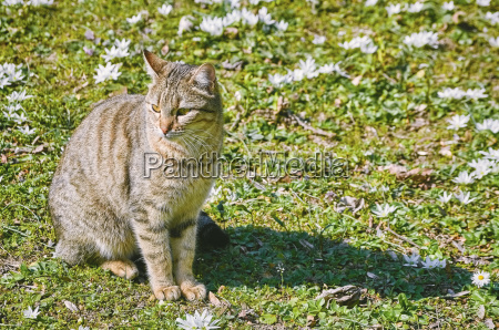 cat on the lawn