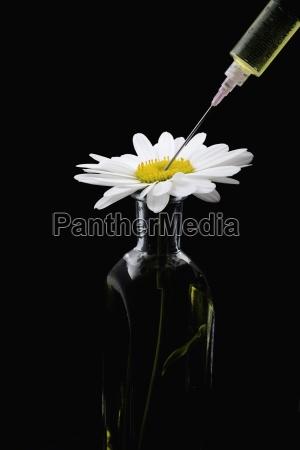 daisy and syringe