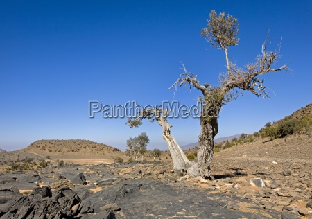 exposed and barren plateau of jabal