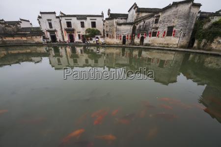 koi in the moon pond hongcun