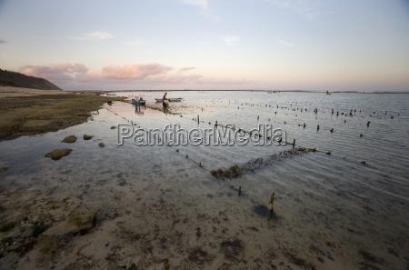 seaweed harvesters bali indonesia