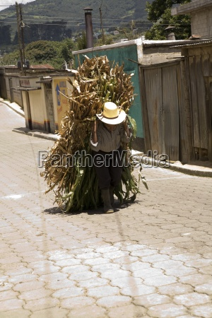 central america elderly farmer carrying his