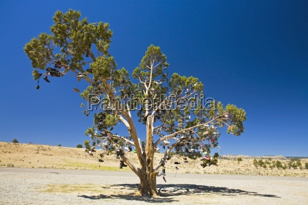 oregon united states of america tree