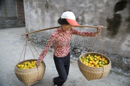 woman carrying citrus fruit in baskets