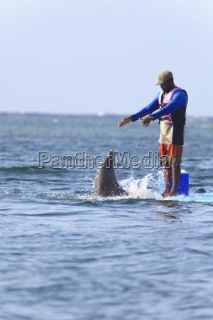 roatan bay islands honduras trainer and