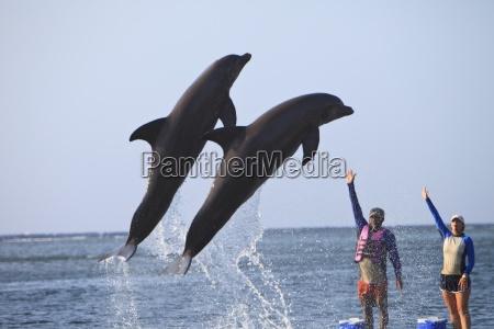 roatan bay islands honduras trainers and