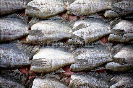 many fish tails