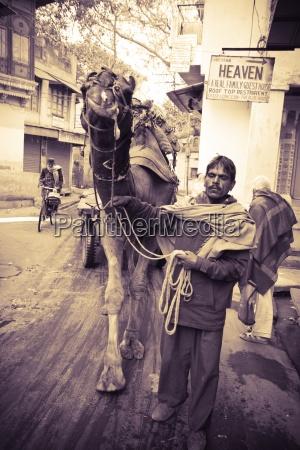 jodhpur india man leading camel in