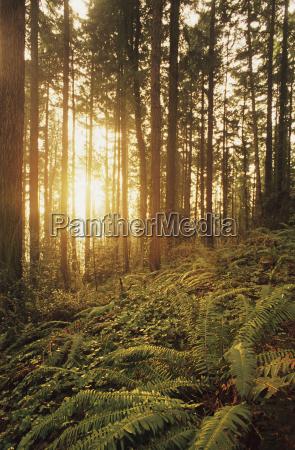 usa oregon ferns and ivy portland