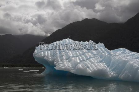 gull sitting on an iceberg in