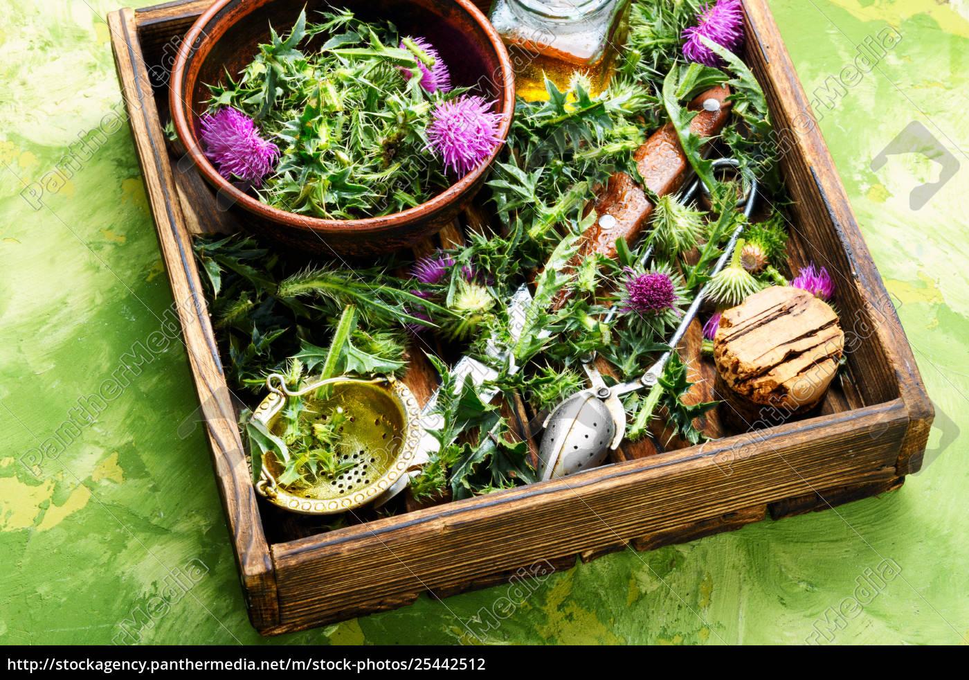 natural, herbal, medicine - 25442512