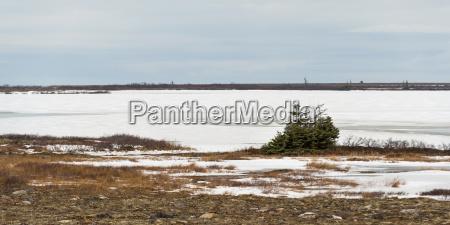 snow on a barren landscape churchill