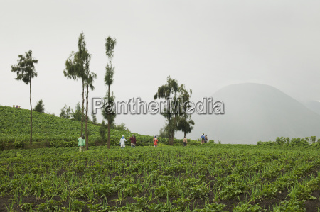 workers in the agricultural fields cemoro