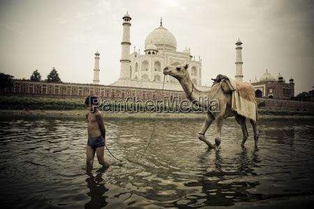 boy leading camel in front of