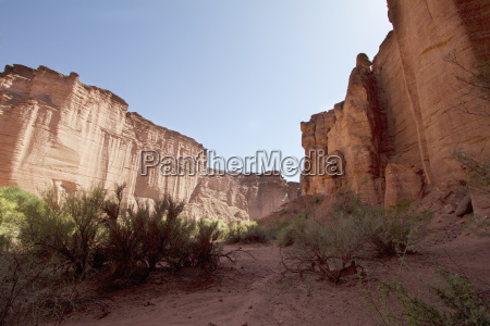 brea trees in talampaya canyon talampaya