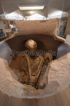 skeleton in a pot on display