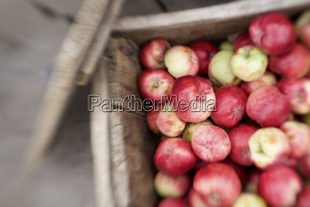ladakh india wooden crate of apples