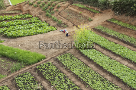 vegetables planted in fields along the