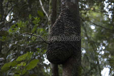 nest in the tropical forest ranomafana