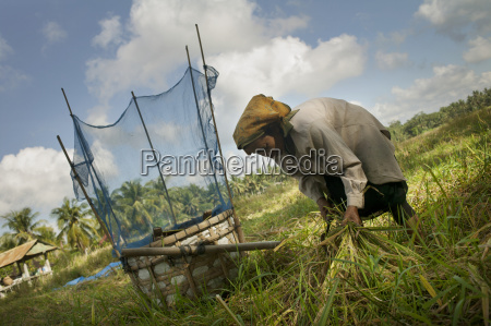 woman working in a rice field
